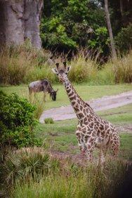 Girafon et gnou