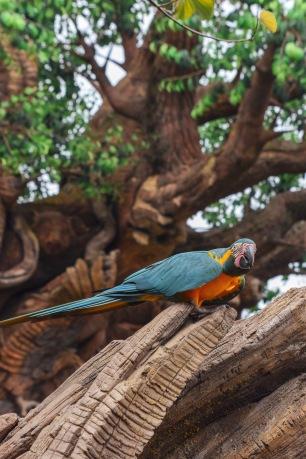 Perroquet ara bleu